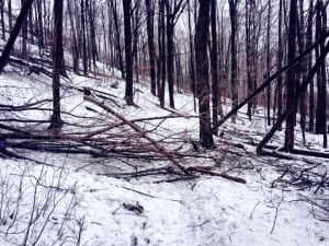 Downed trees on the Bruce Trail