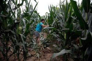 Food and Farm China Corn