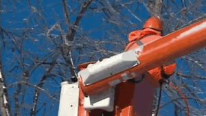 NB Power worker trimming ice-covered trees