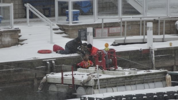 Police can be seen pulling the puppy out of the water. The owner is on the dock.