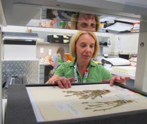Scanning specimens