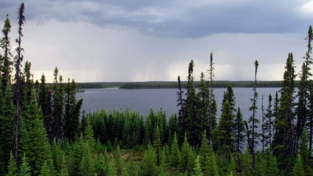 A total of 708,000 square kilometres of boreal forest is now protected by government. Another 460,000 square kilometres are being harvested
