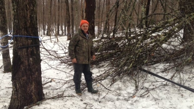 Sugar bush owner Yves Théroux estimates that the clean-up from the ice storm over the holidays will last into the summer.