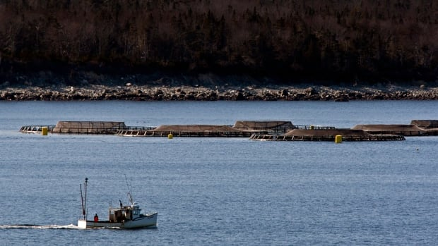 A fishing boat heads past fish farm cages in Shelburne Harbour on Nova Scotia's South Shore.