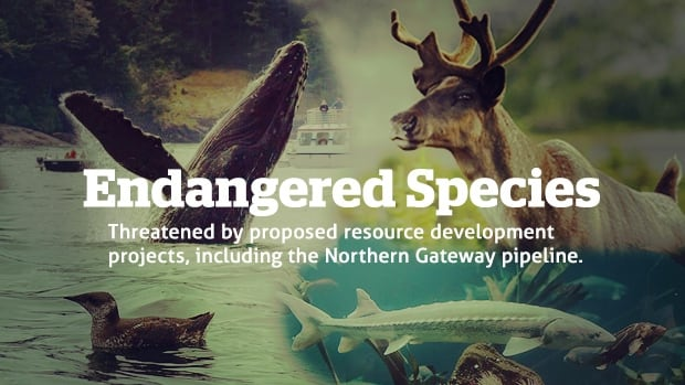 endangered species paper Research paper on endangered species research paper on endangered species think back to the first time you went to the.