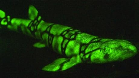 hi-glow-fish-852.jpg