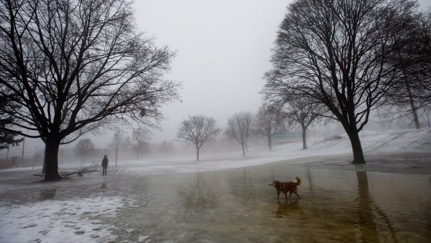 A dog makes his way through the misty fog at a park in Toronto on Saturday.