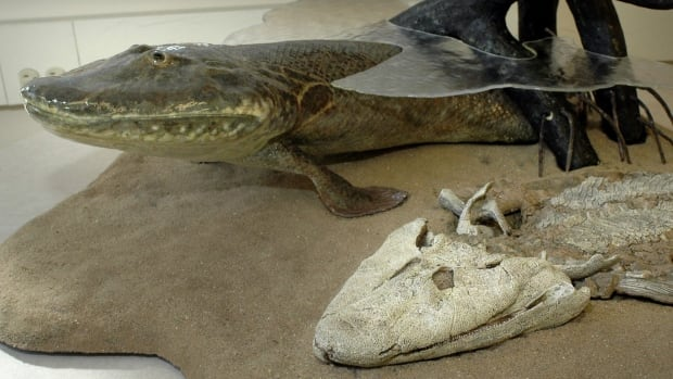 The remains of the Tiktaalik roseae were discovered in 2004 on southern Ellesmere Island in northern Canada.
