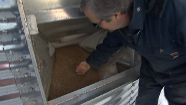 Michel Lepage sifts through grain still sitting in the bin from last year's record-setting harvest.