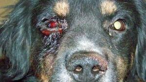 dog abuse