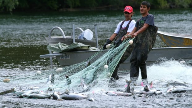 5 vancouver island native bands get commercial fishery for Vancouver island fishing