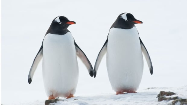 Square your shoulders and take tiny steps, kind of like a penguin, suggests Prof. Rebecca Reed-Jones.
