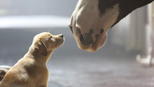 Budweiser's commercial about the friendship between a puppy and a Clydesdale horse is one of 2014's most-shared Super Bowl ads on social media.