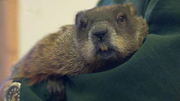 Groundhogs agree to disagree