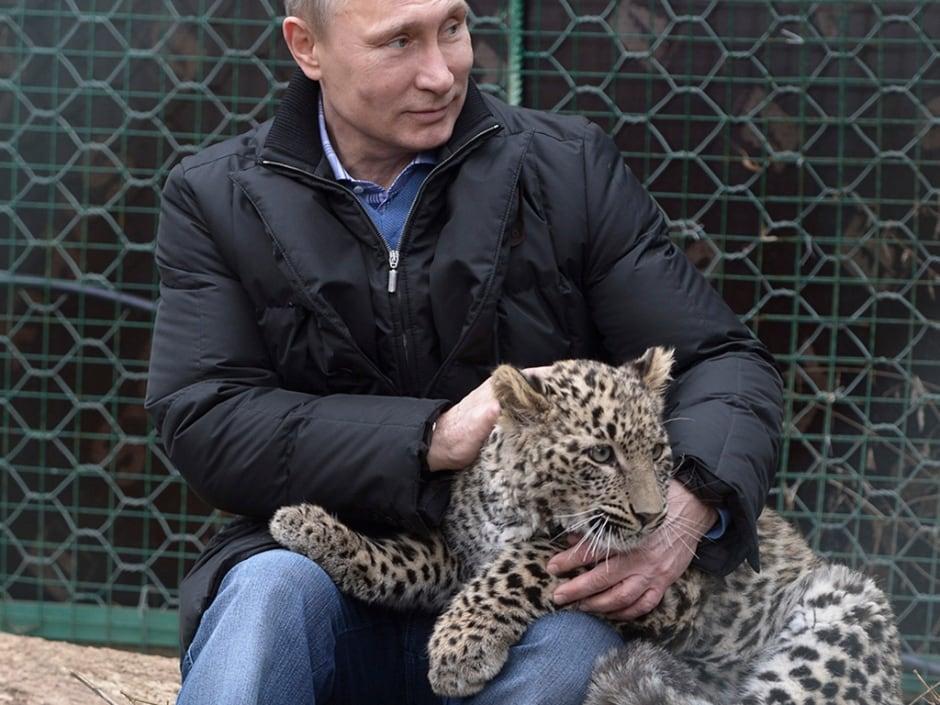 Super Putin leopard