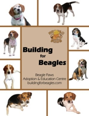 Building for Beagles