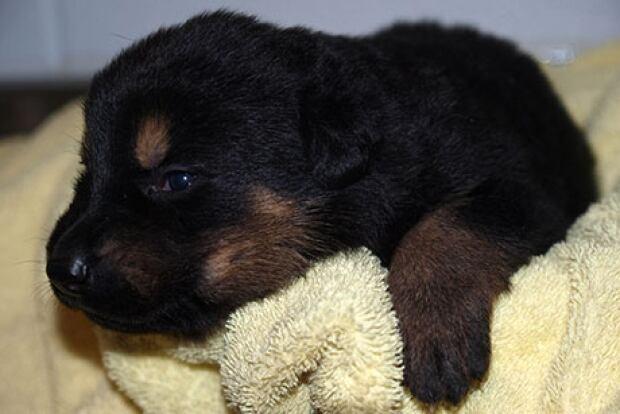Puppy naming