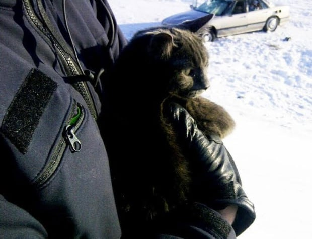 Mounties save cold cat skpic