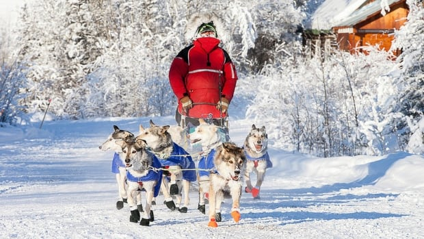 Dawson City musher Brian Wilmshurst at the Yukon Quest's Pelly Crossing checkpoint Tuesday.