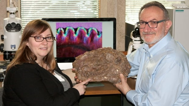 Kirsten Brink and Robert Reisz hold a Dimetrodon skull. For their study, they examined Dimetrodon teeth from the collection of the Royal Ontario Museum.