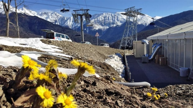 Flowers bloom near the Extreme Sports venue at the highest Olympic elevation. Amid above-freezing temperatures in Sochi, snow-making for alpine events has been dependent on a Toronto operator.