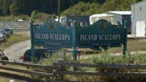 Island Scallops