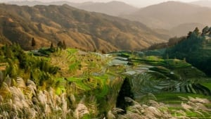 Guizhou China, In the Season of New Rice