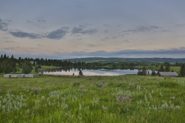 Priddis lake view