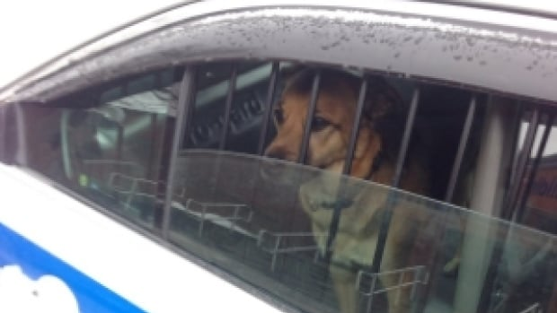 How much is that doggy in the window? Halifax police are thanking  the citizens who helped get the dog out of harm's way.