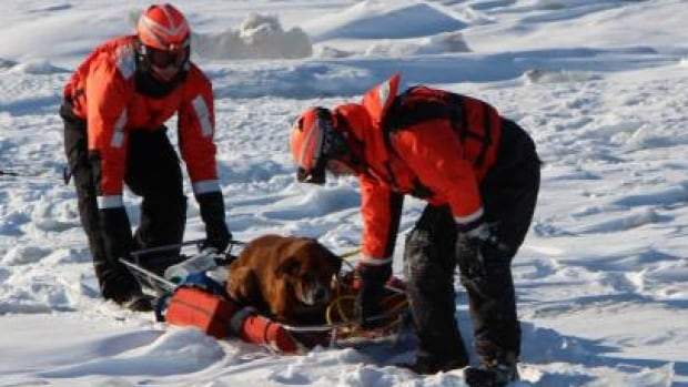 The U.S. Coast Guard may have saved a lost dog's life after plucking off the frozen waters of Lake St. Clair, eight kilometres from shores.