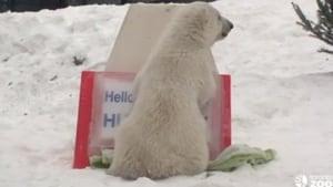 polar-bear-name
