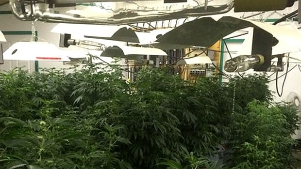 Ktown Medical Growers already operates one legal medical marijuana grow-op in Topley, B.C.