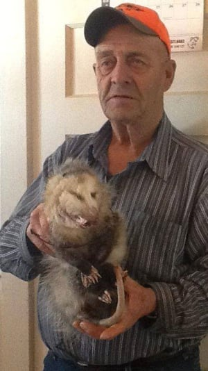 Albert Allain with the opossum he trapped in his snares near Rexton