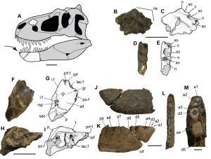 Nanuqsaurus hoglundi fossils