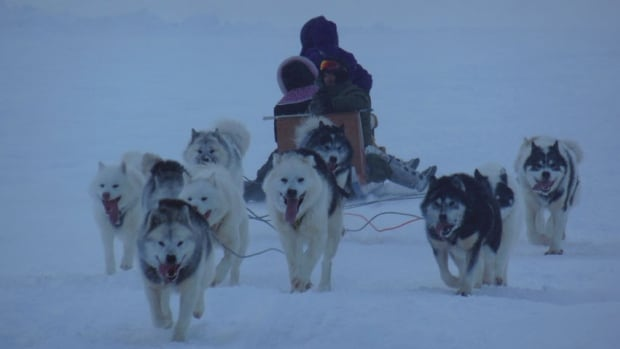 Musher Allen Gordon of Kuujjuaq goes for a practice run the day before the start of the 2014 Ivakkak sled dog race in Kangiqsujuaq with a load of four young women from the community.