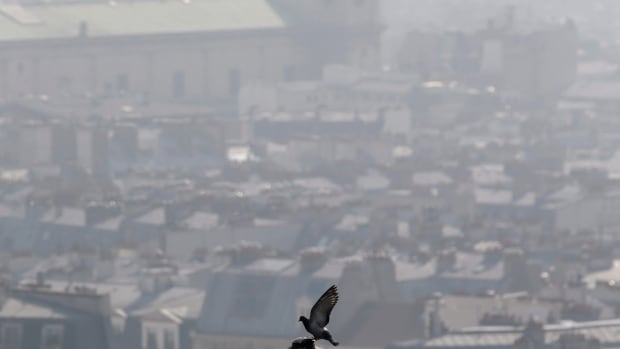 A pigeon is perched at the Saint Vincent de Paul church as smog cloaks Paris.