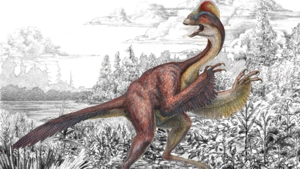 This illustration shows the dinosaur Anzu wyliei, a birdlike animal, about 7 feet tall, that weighed an estimated 500 pounds and roamed western North America around 66-68 million years ago.