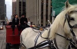 sarah.thomson.horse