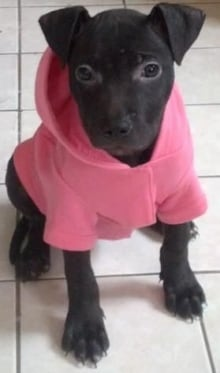 dog-pink-sweater