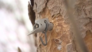 maple tree syrup spout