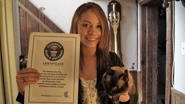 Kitchener resident Sarah Langille, 25, has received a certificate from Guinness World Records recognizing Cye as the shortest cat on Earth.