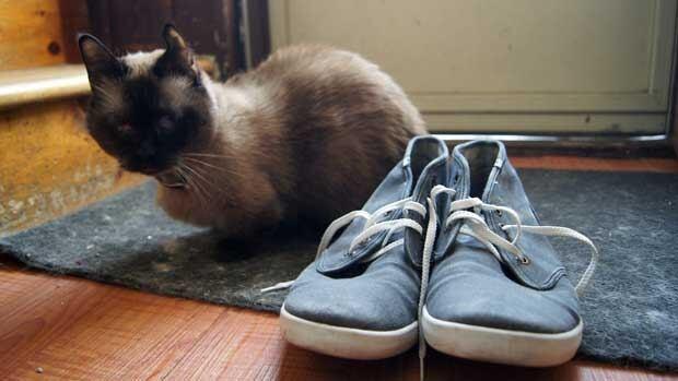 Cye Shoes
