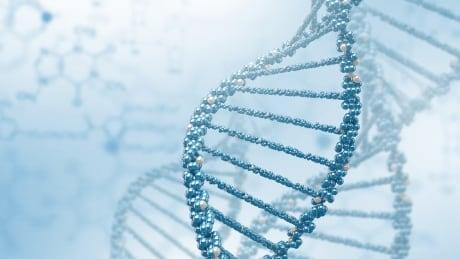 Synthetic yeast chromosome