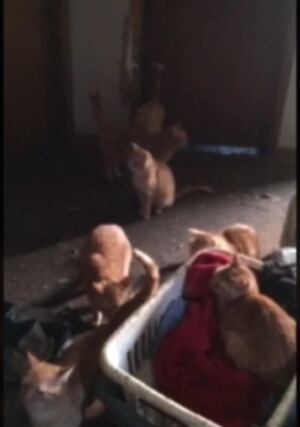 Cats rescued