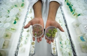 Medical Marijuana 20140330