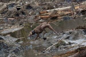 Washington Mudslide dog - 8