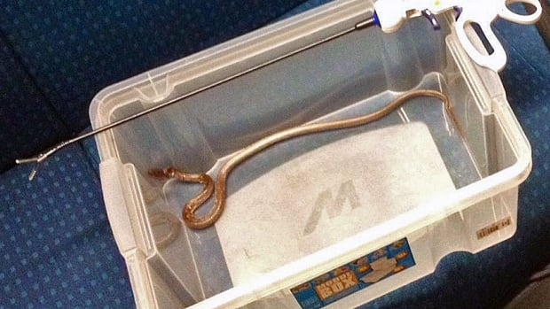 Police in Bern released this image of a 50-centimetre garter snake they caught inside the ventilation shaft of a train on Wednesday morning. The snake, which had become loose on the train, forced 450 passengers to disembark.