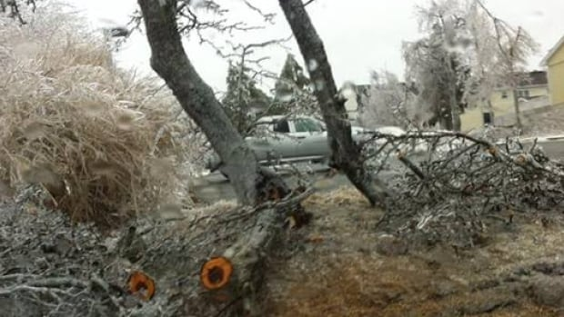 Fallen trees from strong winds and freezing rain have brought down power lines in Canso.