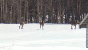 Deer concern apple farmers