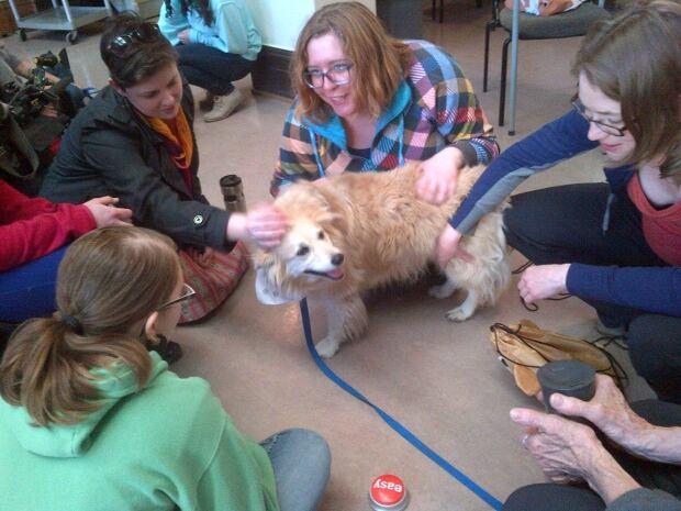 Therapy Dog Training Programs Ontario